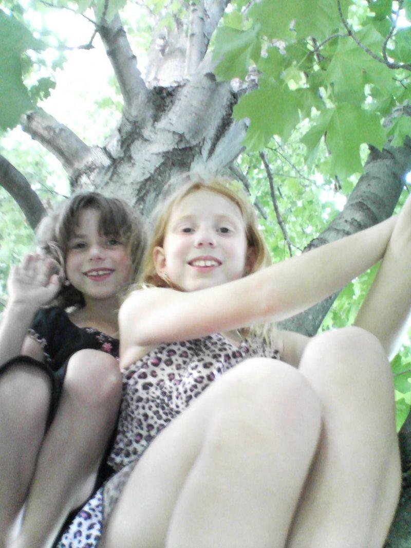 Maple Tree Fairies!