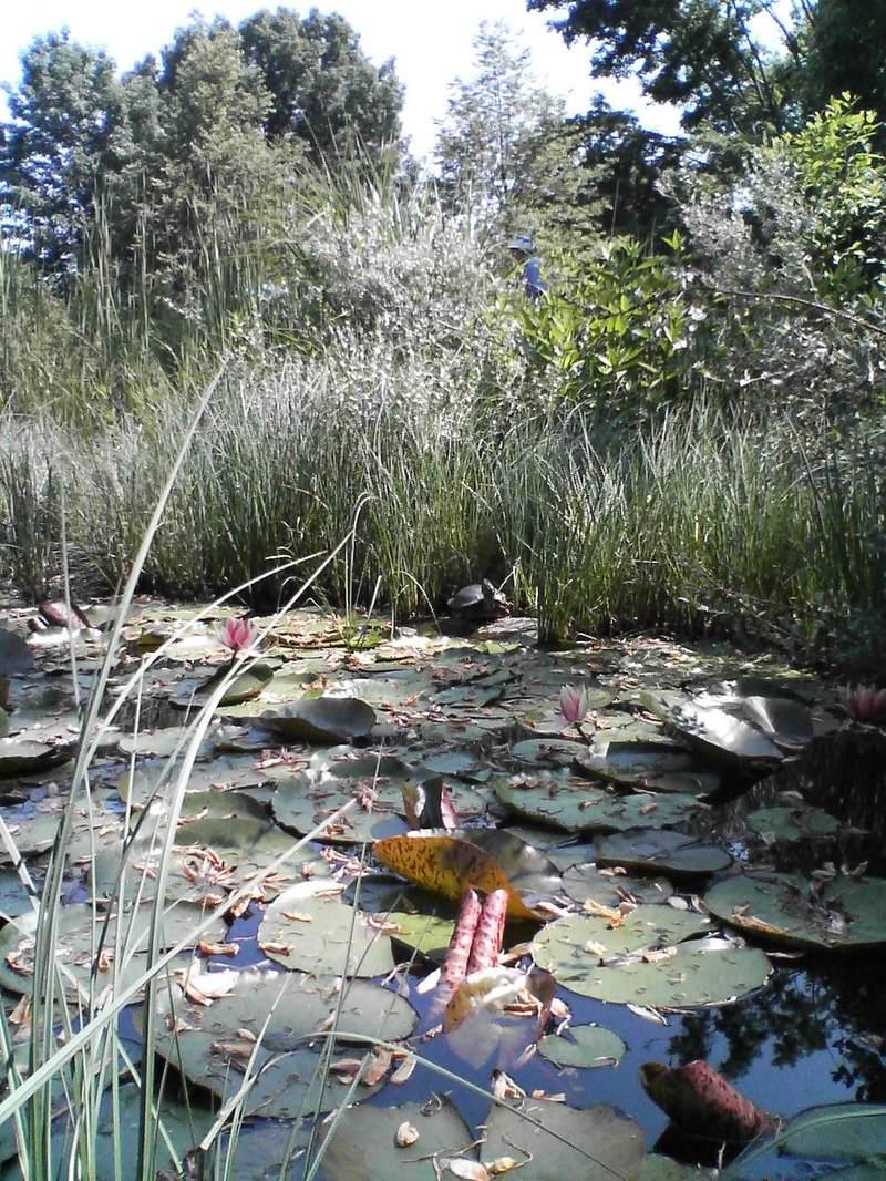 Turtles in the Childrens Garden!
