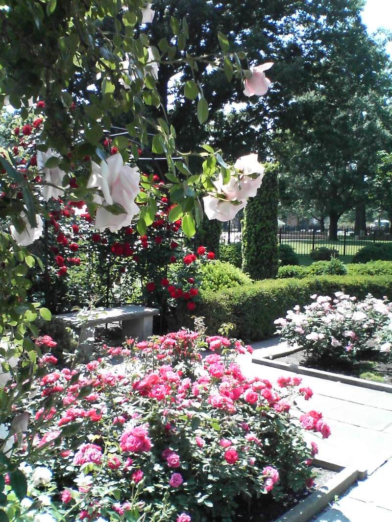 The Magnificent Rose Garden!