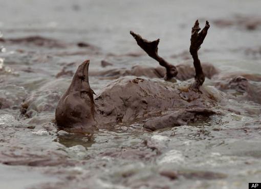 Seabird-covered-in-oil