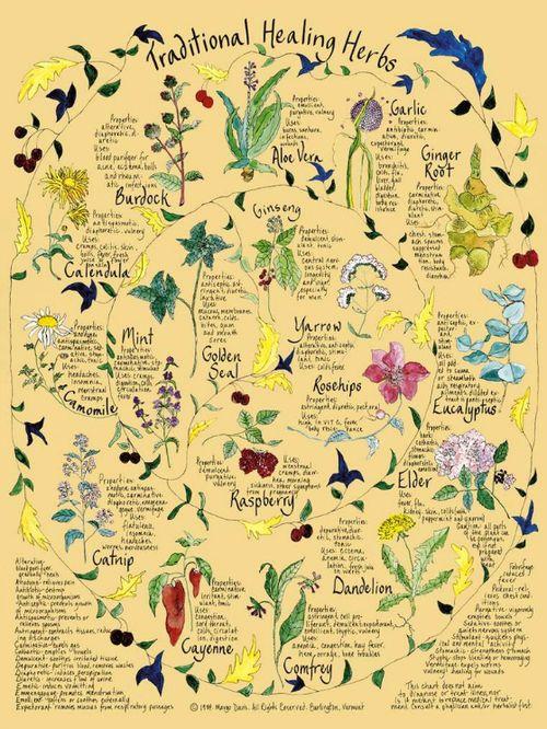 Healing_Herbs1.jpg 175kb