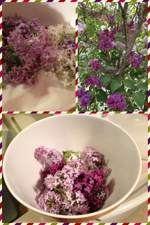 Kitchen Apothecary~ Lilac Sugar