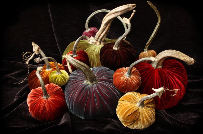 Hot Skwash velvet pumpkins rasberry ice group