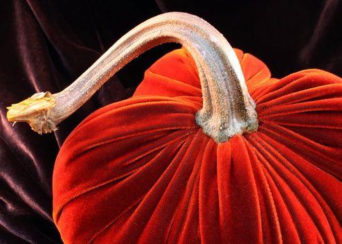 Big red velvet pumpkin hot skwash