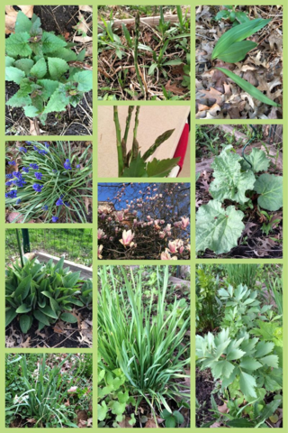 The Witches Garden- it's Spring... Huzzah!