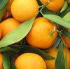Clementine_1